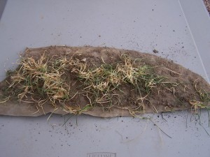 Control Weeds With A Strong Weed Barrier Landscape Fabric